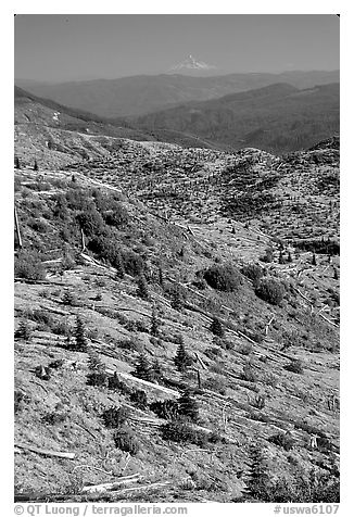 Slopes covered with trees downed by the eruption, Mt Hood in the distance. Mount St Helens National Volcanic Monument, Washington (black and white)