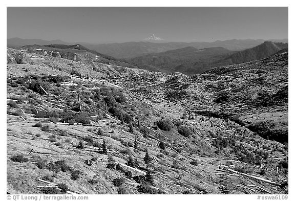 Slopes covered with trees downed by the eruption, Mt Hood in the distancet. Mount St Helens National Volcanic Monument, Washington (black and white)