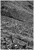 Forests flattened by the eruption lie pointing away from the blast. Mount St Helens National Volcanic Monument, Washington ( black and white)