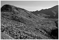 Valley littered with millions of trees flattened by the eruption. Mount St Helens National Volcanic Monument, Washington ( black and white)
