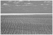 Field with plowing lines, The Palouse. Washington (black and white)