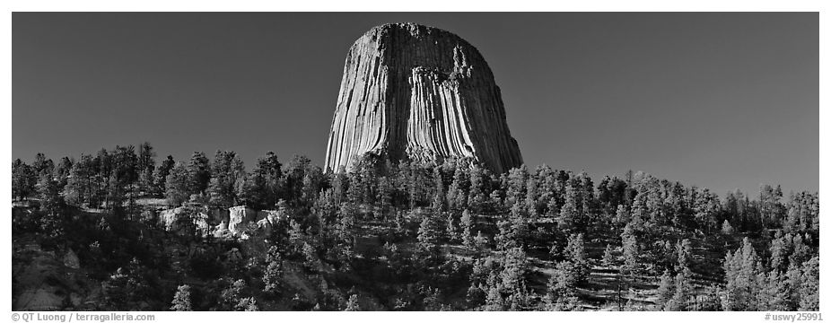 Devils Tower rising above forest. Wyoming, USA (black and white)