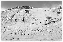 Snowy hill and bighorn sheep, National Elk Refuge. Jackson, Wyoming, USA ( black and white)