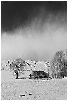 Historic house and bare cottonwoods in winter. Jackson, Wyoming, USA (black and white)