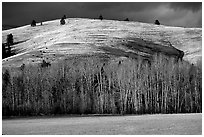 Trees and hills in late fall. Wyoming, USA ( black and white)