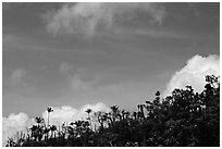 Clouds and trees. Puerto Rico (black and white)