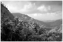 Tropical forest and hills. Puerto Rico (black and white)