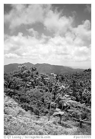 Hills covered with tropical forest. Puerto Rico (black and white)