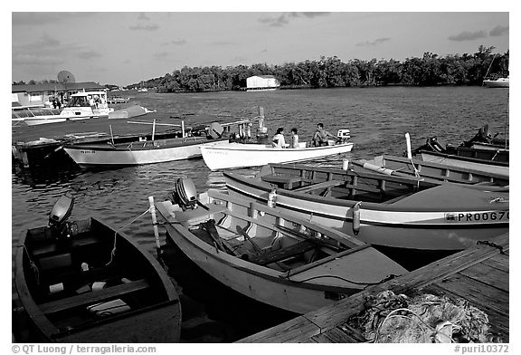 Small boats on a mangrove-covered cost, La Parguera. Puerto Rico (black and white)