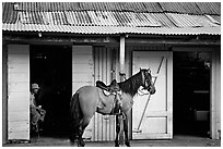 Man sitting inside a bar with a horse parked outside, North East coast. Puerto Rico ( black and white)