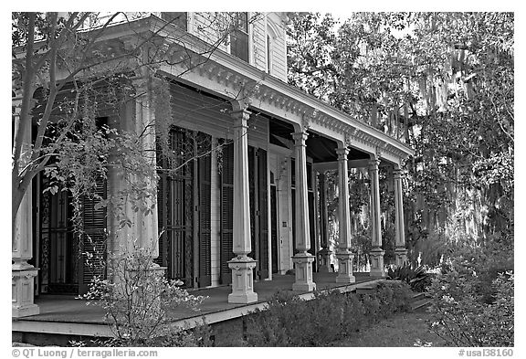 House and trees with Spanish moss in frontyard. Selma, Alabama, USA (black and white)