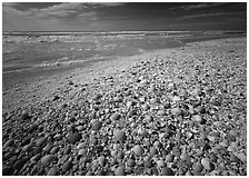 Beach covered with sea shells, sunrise. Sanibel Island, Florida, USA (black and white)