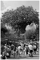 The Tree of Life, centerpiece of Animal Kingdom Theme Park. Orlando, Florida, USA ( black and white)
