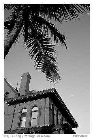 Red house and palm tree. Key West, Florida, USA (black and white)