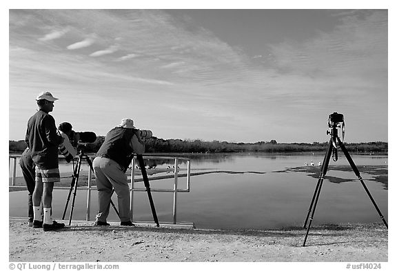 Photographers with big lenses, Ding Darling NWR, Sanibel Island. Florida, USA (black and white)