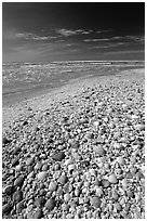 Beach covered with sea shells, mid-day. Sanibel Island, Florida, USA (black and white)