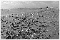 Shells washed-up on shore and beachcombers. Sanibel Island, Florida, USA (black and white)