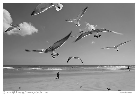 Seagulls and Atlantic beach, Jetty Park. Cape Canaveral, Florida, USA (black and white)