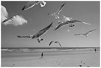 Seagulls and Atlantic beach, Jetty Park. Cape Canaveral, Florida, USA ( black and white)