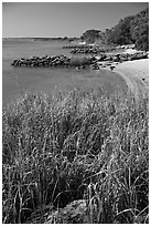 Grasses and  Matanzas River, Fort Matanzas National Monument. St Augustine, Florida, USA (black and white)