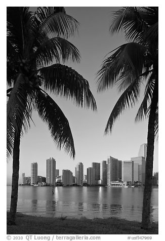 Palm trees and Miami skyline at sunrise. Florida, USA (black and white)