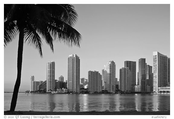 Miami downtown skyline and palm tree. Florida, USA (black and white)