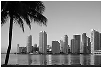 Miami downtown skyline and palm tree. Florida, USA ( black and white)