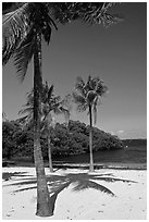 Palm trees and beach, John Pennekamp Reef State Park, Key Largo. The Keys, Florida, USA ( black and white)