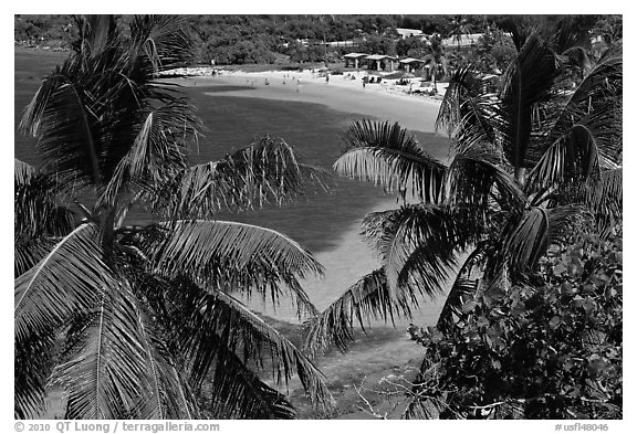Beach seen from above through palm trees, Bahia Honda Key. The Keys, Florida, USA (black and white)