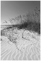 Grasses and white sand ripples on beach, Fort De Soto Park. Florida, USA (black and white)
