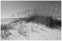 White sand beach with grasses, Fort De Soto Park. Florida, USA (black and white)