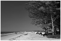 White sand beach and ironwood trees, Fort De Soto Park. Florida, USA ( black and white)