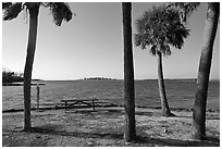 Palm trees,  Fort De Soto Park. Florida, USA (black and white)