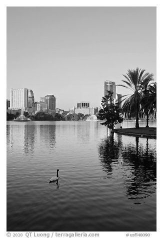 Swan, palm trees, and skyline, lake Eola. Orlando, Florida, USA (black and white)