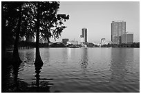 Bald Cypress and skyline, Lake Eola. Orlando, Florida, USA (black and white)