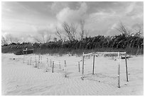 Sea turtle nestling area, Fort De Soto beach. Florida, USA ( black and white)