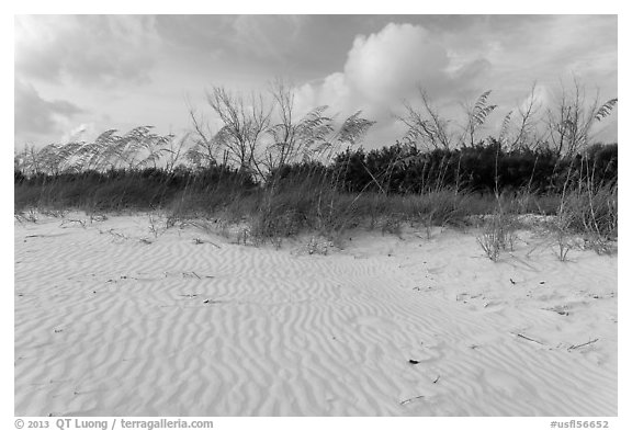 Rippled white sand and grasses, Fort De Soto beach. Florida, USA (black and white)