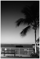 Bench and palm tree and sunset. Key West, Florida, USA (black and white)