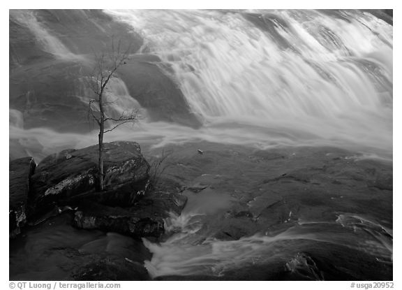 Tree and waterfall at sunrise in High Falls State Park. Georgia, USA (black and white)