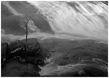Tree and waterfall at sunrise in High Falls State Park. Georgia, USA ( black and white)