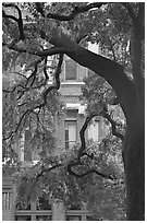 Live Oak tree and facade. Savannah, Georgia, USA (black and white)