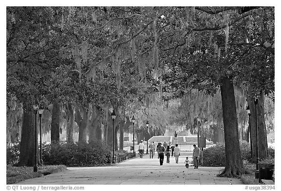 Alley in Forsyth Park. Savannah, Georgia, USA (black and white)