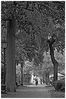 Street lined with oak trees and Spanish moss. Savannah, Georgia, USA (black and white)