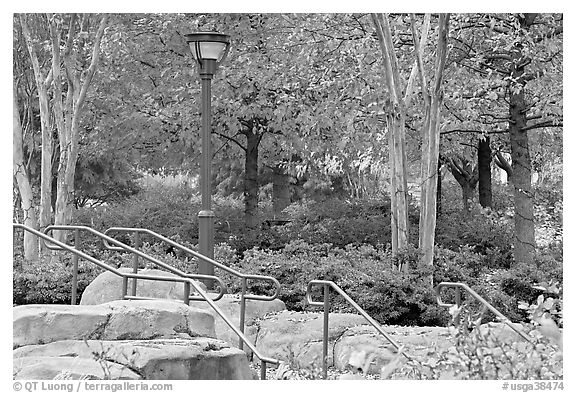Railings, lamp, and trees in autumn colors, Centenial Olympic Park. Atlanta, Georgia, USA (black and white)