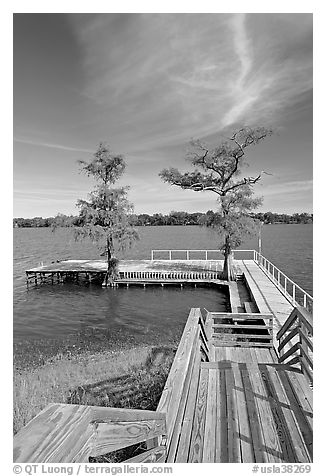 Deck and bald cypress on Lake Providence. Louisiana, USA