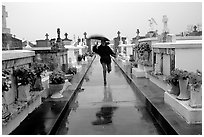 Rain in Saint Louis cemetery. New Orleans, Louisiana, USA ( black and white)