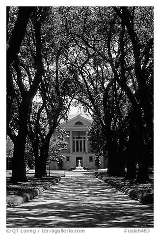 Tree alley leading to a Plantation house. Louisiana, USA (black and white)