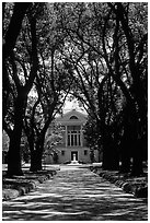 Tree alley leading to a Plantation house. Louisiana, USA ( black and white)