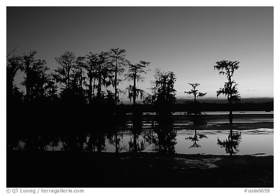 Cypress trees reflected in a pond, Lake Martin. Louisiana, USA (black and white)