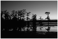 Cypress trees reflected in a pond, Lake Martin. Louisiana, USA ( black and white)